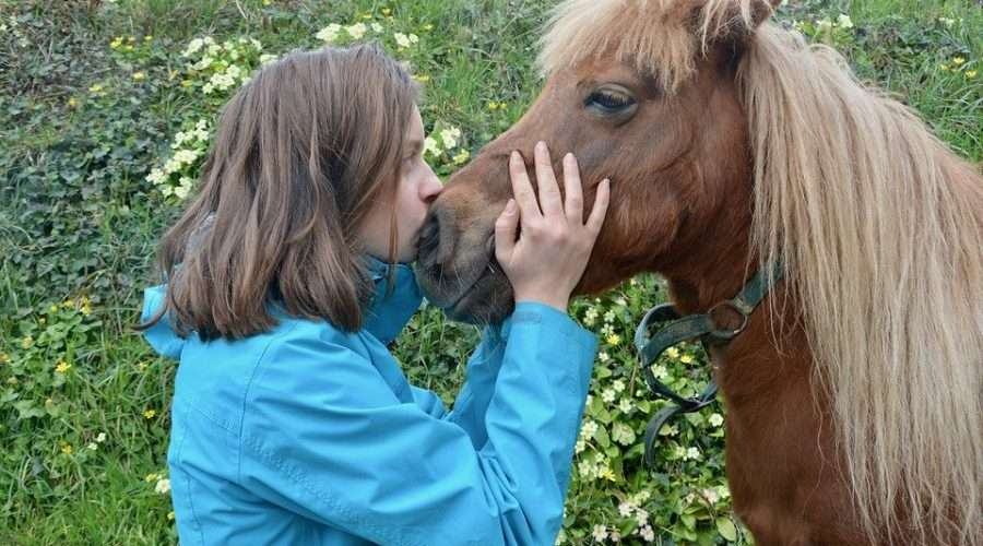 10 bonnes raisons d'adopter un poney shetland