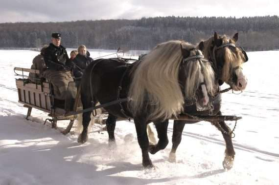black forest cheval