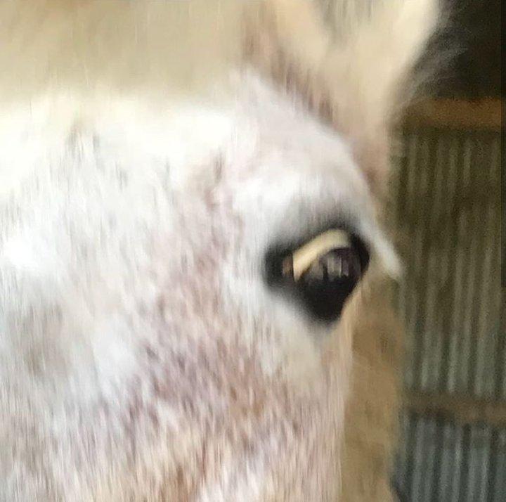 Photo de cheval floue