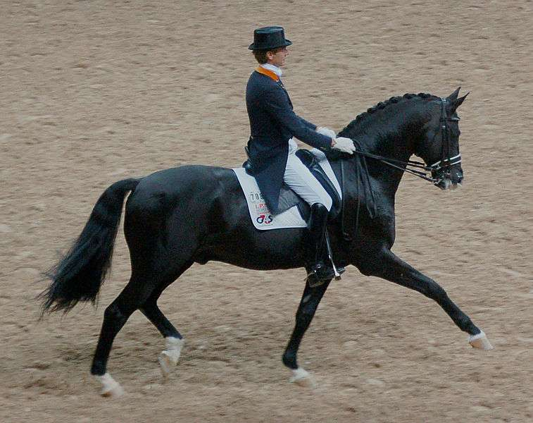 edward gal dressage