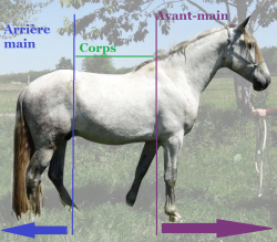 corps cheval