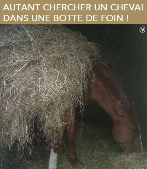 paille cheval