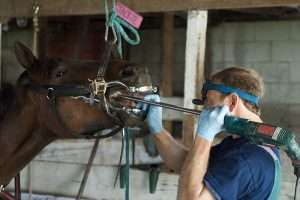 soins dentaires chevaux