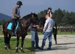 coach equitation