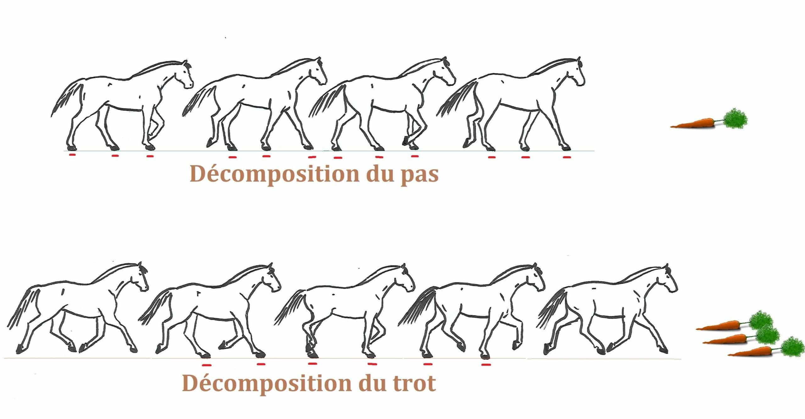 Allures cheval