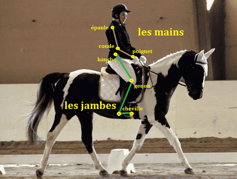 Galop 3 position