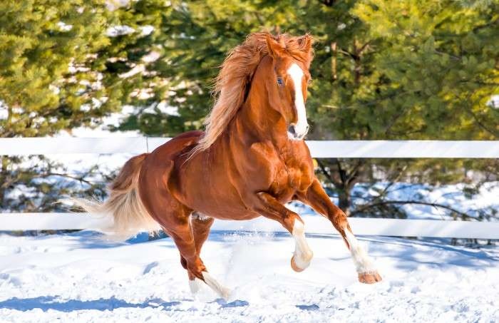 cheval neige
