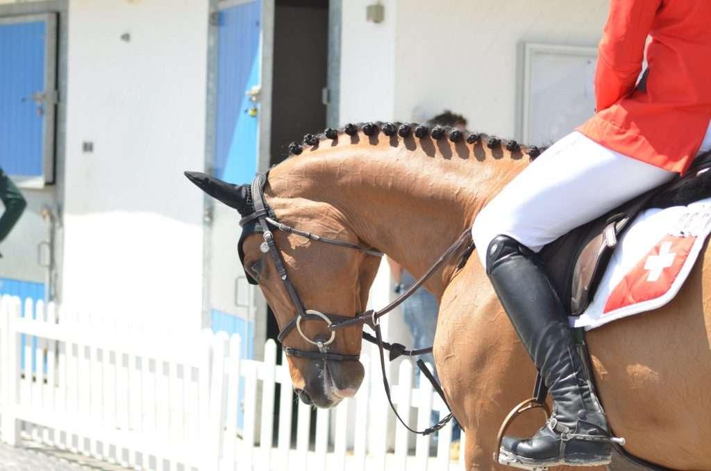 coupe des nations équitation