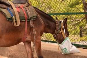 alimentation cheval