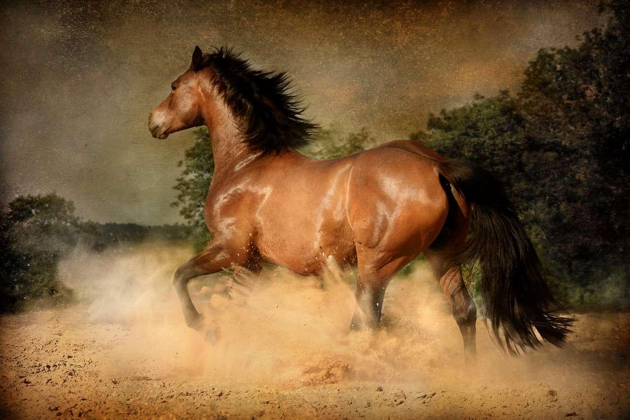 terrain cheval bouillasse