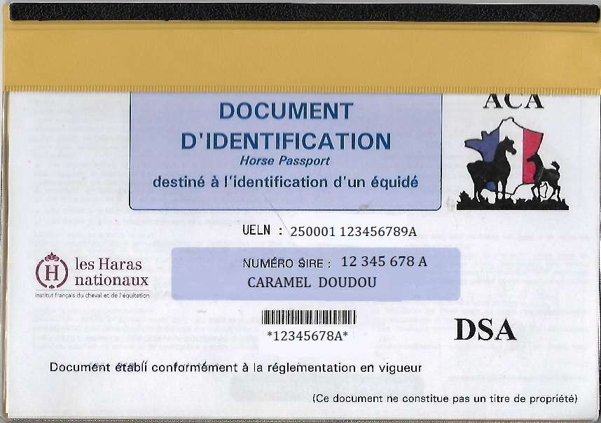 identification cheval galop 5